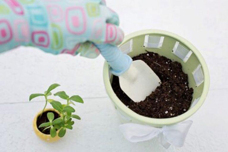 A kertészeti perlit az otthoni kertészkedésben is jól jön